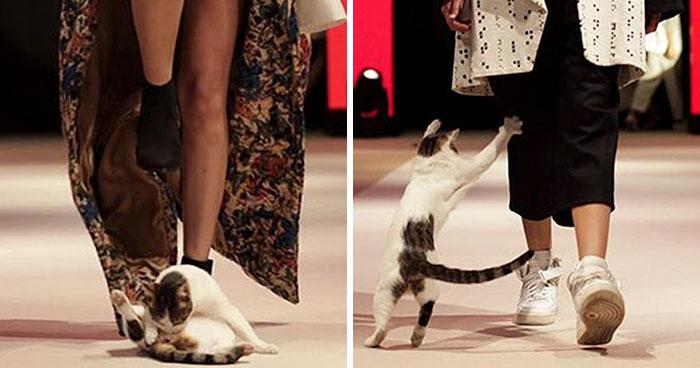 Gatinho arrasa ao invadir passarela em desfile de moda