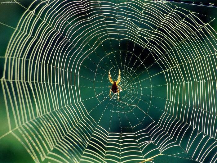 Teia de aranha é uma das maiores esperanças da Ciência