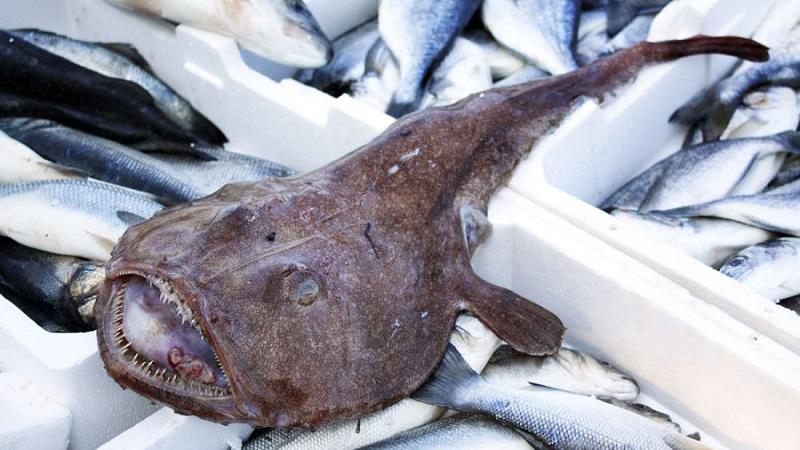 Imagens mostram mais da preocupante situação dos oceanos