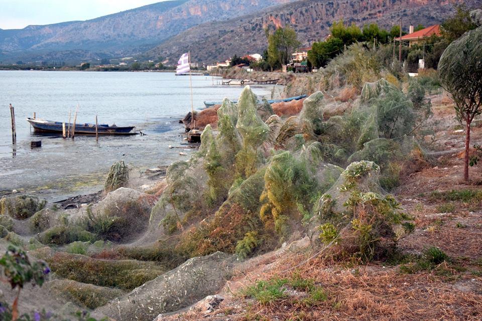 Pesadelo: Teia de mais de 300 metros aparece em cidade da Grécia