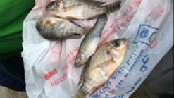 E choveu peixe no México...