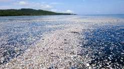 Mar de lixo assusta e preocupa pesquisadores