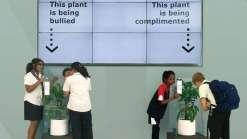 Experimento mostra diferença que o bullying faz em uma planta