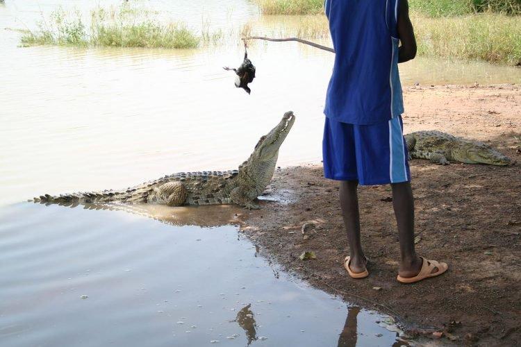 Conheça a vila africana onde crocodilos e humanos vivem em paz