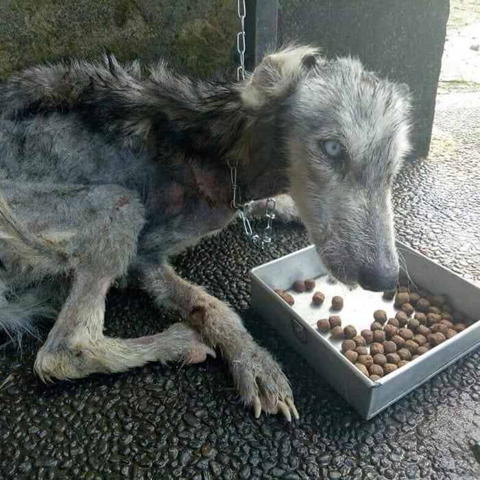 Cão resgatado tem uma recuperação que você não vai acreditar
