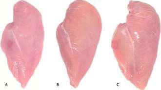O que são as faixas brancas encontrada no peito de frango?