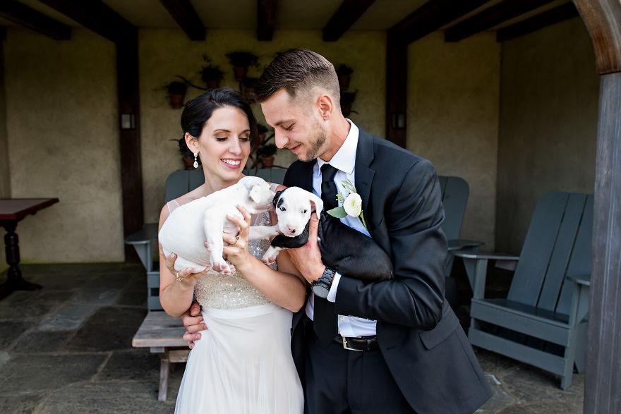 Casal troca buque de flores por cachorros em casamento