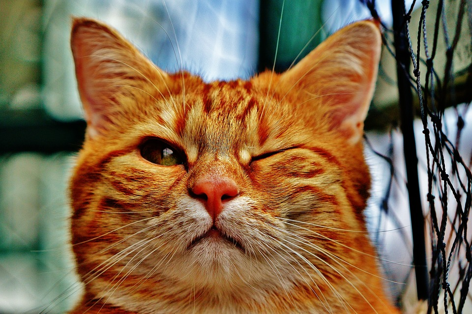 O que aconteceria se todos os gatos do mundo morressem?