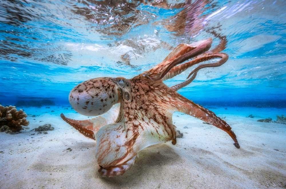 As melhores fotos subaquáticas do ano
