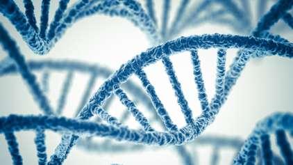 EUA pode ter realizado modificações genéticas em embriões