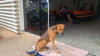 Cachorro espera a 4 meses em porta de hospital pelo dono morto