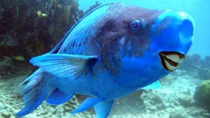 10 animais que você não sabia que existia