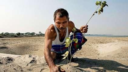 Plantando árvore todos os dias ele criou a sua própria floresta