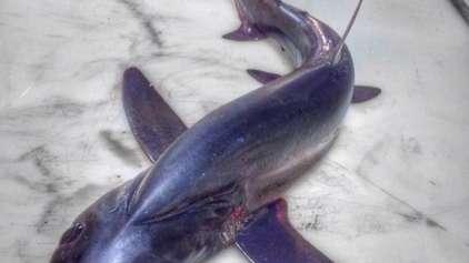 Mais alguns dos peixes mai assustadores do fundo do mar