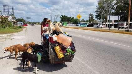 """""""Homem cão"""" do México dedica a sua vida a salvar cães de rua"""