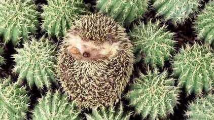9 provas de que os animais conseguem dormir em qualquer lugar