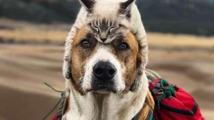 Estes dois amigos de viagem vão te surpreender!