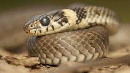 """Cidades dos EUA ficam em alerta em caso de um """"Snakenado"""""""