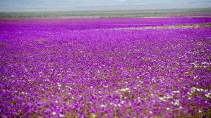 Deserto Florido surpreende cientistas e turistas