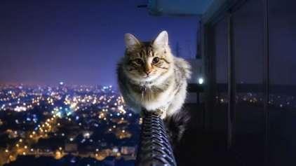 Conheça o projeto da Cidade sem gatos!