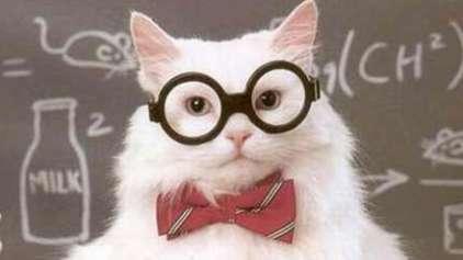 Os 5 gatinhos mais importantes da história da ciência