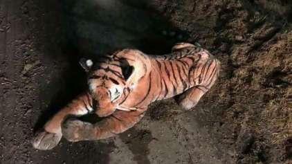 """""""Tigre"""" de pelúcia assusta fazendeiro e a polícia por horas"""