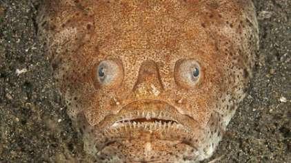 Os 8 peixes mais assustadores do fundo do mar
