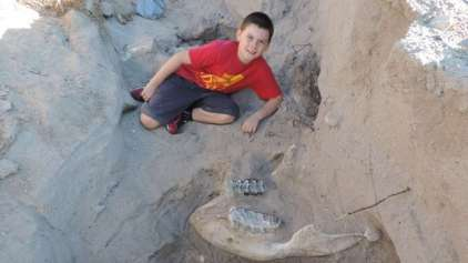 Garoto de 10 anos tropeça e descobre fóssil de 1 milhão de anos