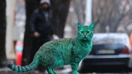 Depois dos cães azuis, gato verde é encontrado na Bulgária
