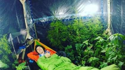 Jovem tenta sobreviver em barraca selada e com 200 plantas