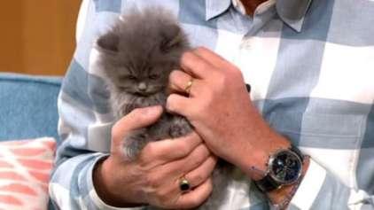 Britânica sugere banir os gatos do país para proteger as aves