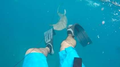 Impressionante! Homem grava momento que é atacado por Tubarão
