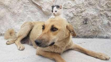 Gato e cão sobreviventes de guerra formam amizade única