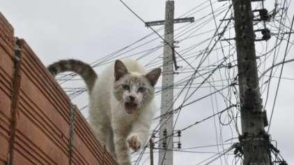 Família russa culpa o gato pelas contas de energia alta