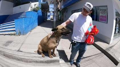 Ex-Jackass acampa na rua para poder dormir com cachorro de rua