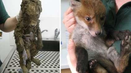 15 animais antes e depois de serem resgatados