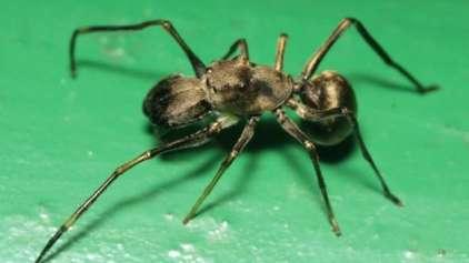 Aranha amamenta seus filhotes?