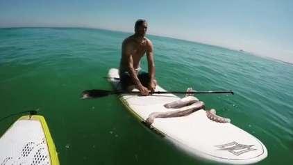 Vejo o momento que uma lula se agarra a prancha de um surfista