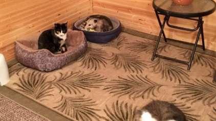 Vovó cuida de gato até que seu neto a avisa de algo errado