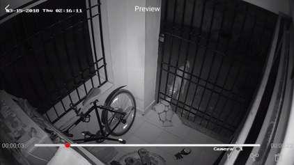Homem coloca câmera e grava ladrão nada comum