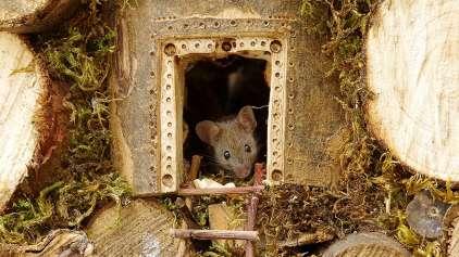 Homem cria uma vila completa para camundongos no seu quintal