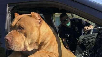 """Policial encontra surpresa ao atender chamado de """"cão perigoso"""""""