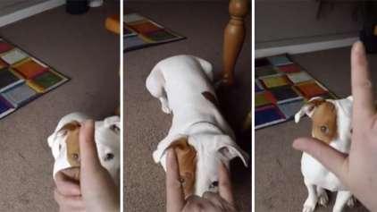 Conheça Igor, o cachorro que aprendeu linguagem de sinais