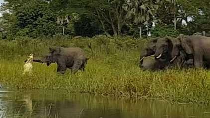 Elefante escapa milagrosamente de crocodilo