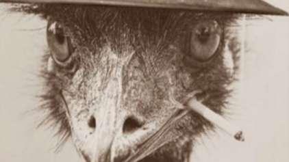 Você já ouviu falar da Grande Guerra dos Emus?