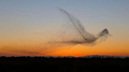 Momento único - Homem fotografa pássaros formando um pássaro
