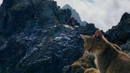 Montanhista sobe montanha e encontra um gato de boa lá em cima