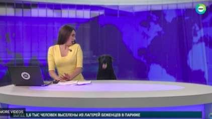 Na Russia, é o jornal que vira notícia. Com ajuda de um cãozinho