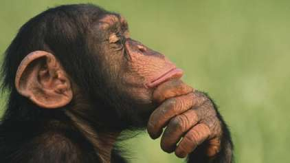 Animais são seres racionais ou não?
