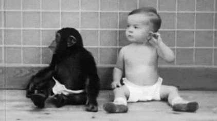 O que acontece quando se cria um macaco como um ser humano?